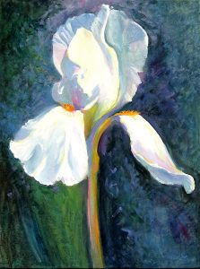 White-Iris-1-36-x-30-Acrylic-on-Canvas-2005-223x300